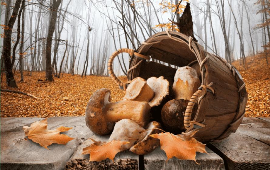Essbare Pilze bestimmen