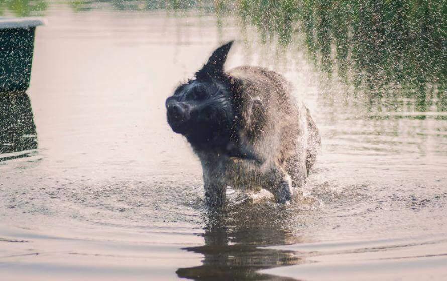 Hundebadestelle - Hund schüttelt sich