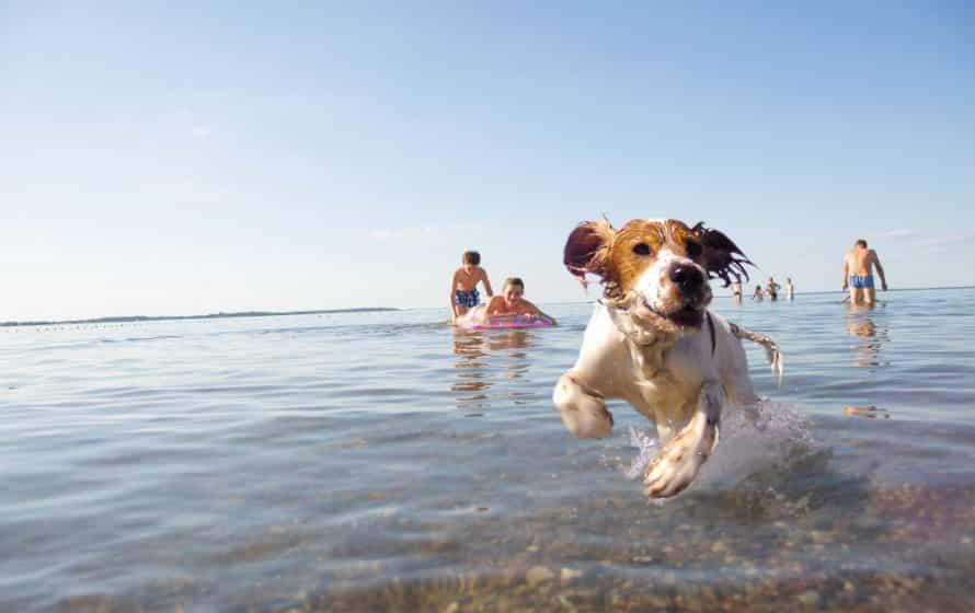 Spaß im Urlaub mit Hund am See