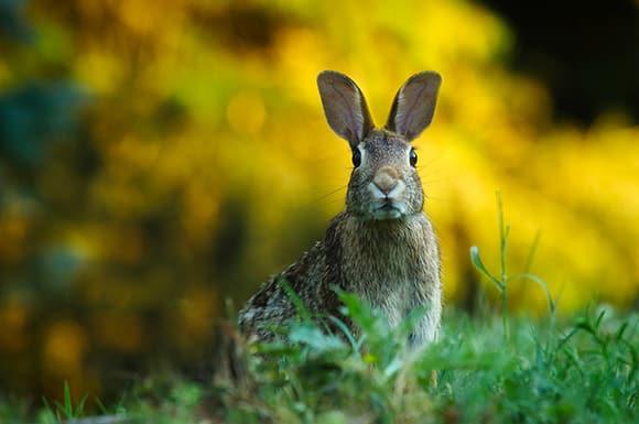 Symbolbild Ostern mit Hase